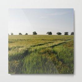 Barley field with trees on the horizon. Norfolk, UK. Metal Print
