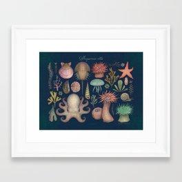 Aequoreus Vita Framed Art Print