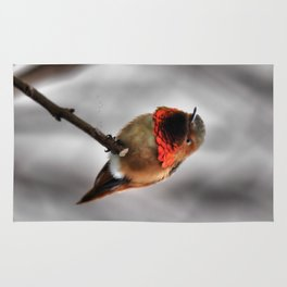 Allen's Hummingbird. © J. Montague. Rug