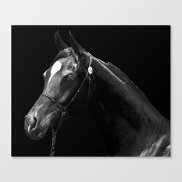 Arabian in B&W Canvas Print
