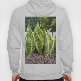 Beautiful and colorful cactus Hoody