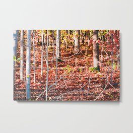 Colorful Autumn/fall forest Metal Print