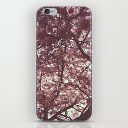 Field of Dogwoods iPhone Skin