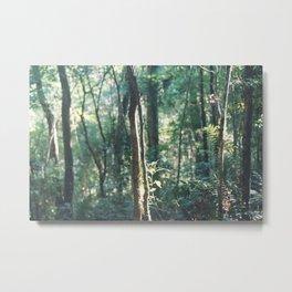 Iguazú Forest  Metal Print