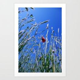 poppy flower no4 Art Print