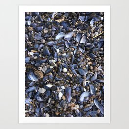 Beach floor with mussels and snails Art Print