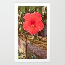 Last Flower of the Summer Art Print