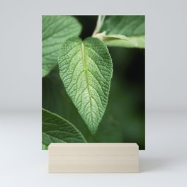 Textured Sage Leaf Mini Art Print