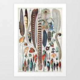 Vintage Illustration Feather and Bird Chart Kunstdrucke
