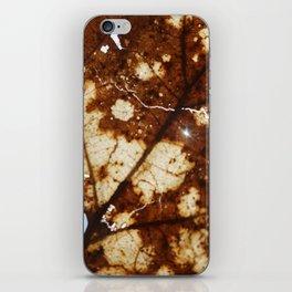 Sunlight through a crackled Autumn Leaf iPhone Skin