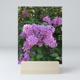 Lilac Perfume Mini Art Print