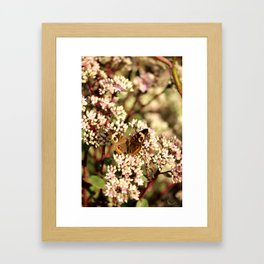Buckeye Butterfly On Pale Pink Flowers Framed Art Print