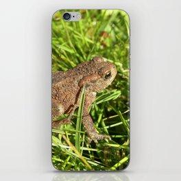 tree frog macro IV iPhone Skin