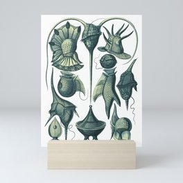 Ernst Haeckel Peridinea Plankton Algae Teal Mini Art Print