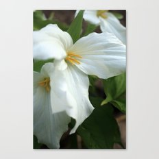 Fleeting Beauties Canvas Print