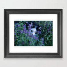 Just another kitty among the flowers Framed Art Print