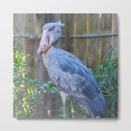 Do Do Bird Metal Print