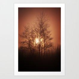 Sunset Behind Grove Of Trees Art Print