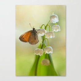 In the morning sun Canvas Print