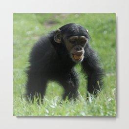 Baby Chimp Metal Print
