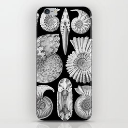 Sea Shells and Fossils (Ammonitida) by Ernst Haeckel iPhone Skin
