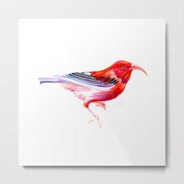 Iwi Bird Metal Print