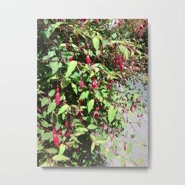 Fuschia Photo Metal Print