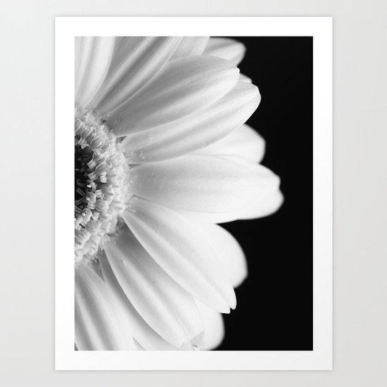 Gerbera Daisy Art Print