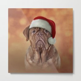 dog Dogue de Bordeaux in red hat of Santa Claus Metal Print