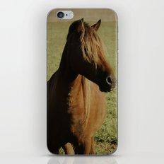 Dark Horse iPhone & iPod Skin