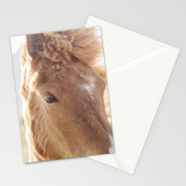 Golden Horse Photograph Stationery Cards