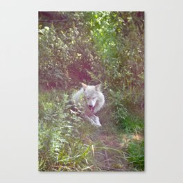 Wolf Relaxation Canvas Print