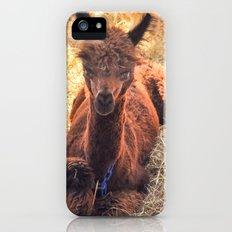 Llama Tude iPhone (5, 5s) Slim Case