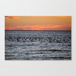 Blue-bill Duck Sunrise Canvas Print