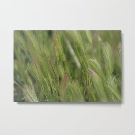 Closeup of Hayseed Heads - Wild Grasses of Utah Metal Print