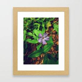 Fiore Viola Framed Art Print