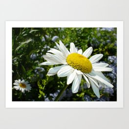 Close Up Common White Daisy With Garden Art Print