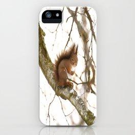 Little Squirrel On The Branch - Autumn Scene #decor #society6 #buyart iPhone Case