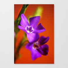 orange and purple Canvas Print