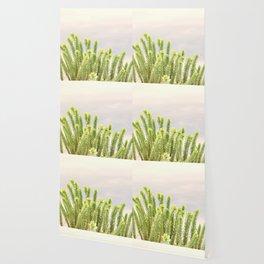 dunes plants Wallpaper