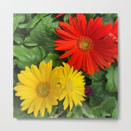Colorful Daisies Metal Print