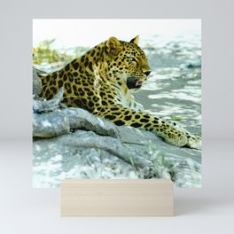 Leopard in Repose Mini Art Print