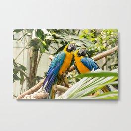 Parrots couple Metal Print