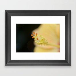 Hibiscus Up Close Framed Art Print
