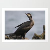 Cormorant stance Art Print