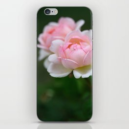 Light Pink Roses on Green Background, Symbol of Love and Friendship iPhone Skin