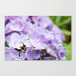 Light Purple Hydrangea Canvas Print