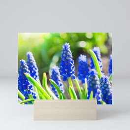 Grape Hyacinth Mini Art Print