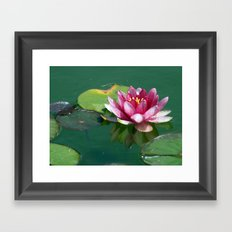 Pink Waterlilly Framed Art Print