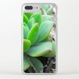 Graptopetalum Succulent Clear iPhone Case